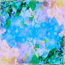 桜  桜の花  青空  風景  自然の画像(風景 画に関連した画像)