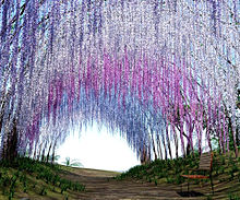 風景  自然  藤棚のトンネル  名所の画像(スポットに関連した画像)