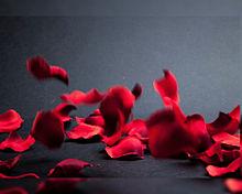 ローズペタル  花びら  薔薇 プリ画像