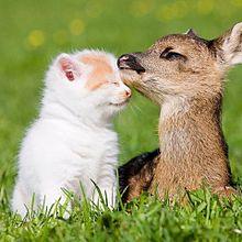 子猫とバンビの画像(プリ画像)