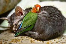子猫とインコの画像(プリ画像)