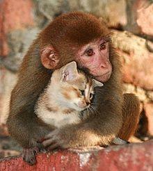 子猫と子猿の画像(プリ画像)