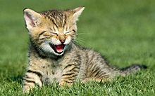 猫の日*笑う子猫の画像(プリ画像)