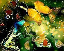 蝶 々   (説明文 必読)の画像(プリ画像)