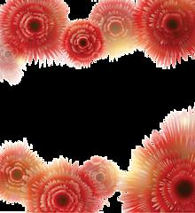 フレーム*赤い花 (背景透過)   (説明文 必読)の画像(プリ画像)