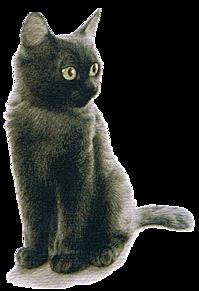 スタンプ*リアルな黒猫 (背景透過)  (説明文 必読)の画像(プリ画像)