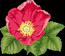 スタンプ*芙蓉の花 (背景透過)  (説明文 必読)の画像(プリ画像)
