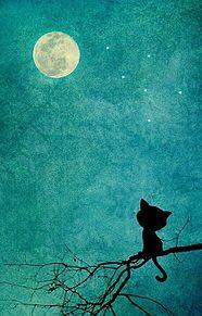 満月と黒猫   (説明文 必読)の画像(プリ画像)