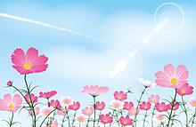 青空と秋桜畑   (説明文 必読)の画像(プリ画像)