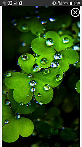 ✔画像説明文必読✔雨降りのクローバー プリ画像