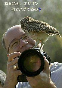 撮影中にフクロウが…の画像(プリ画像)