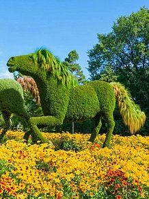 苔植物で出来た馬の画像(プリ画像)