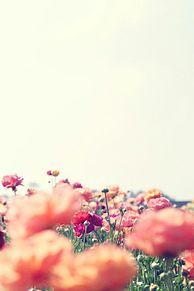 Flowers プリ画像
