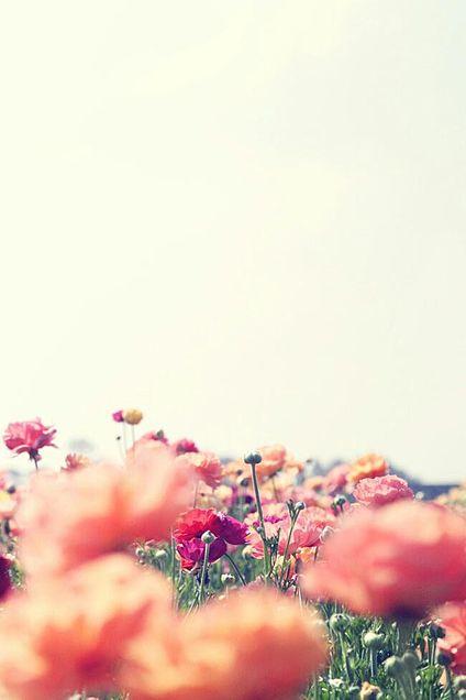 Flowersの画像 プリ画像