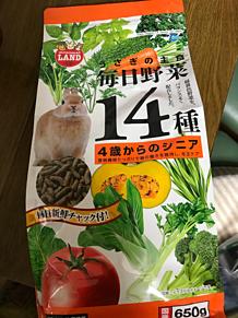 毎日野菜14種 うさぎ シニア ラビットフード
