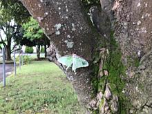 緑色 蝶々