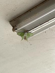 蝶々 緑色  プリ画像