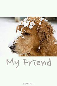 壁紙 背景 待ち受け画像の画像(犬 冬 素材 待ち受けに関連した画像)