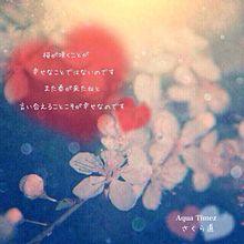 さくら道~桜か咲くことの画像(プリ画像)