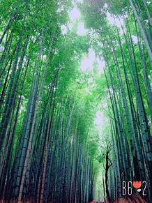 嵐山 竹の画像(パワースポットに関連した画像)