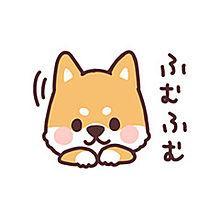 ころころ柴犬の画像(プリ画像)