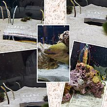 21.07.25 Sunday 京都水族館の画像(水族館に関連した画像)