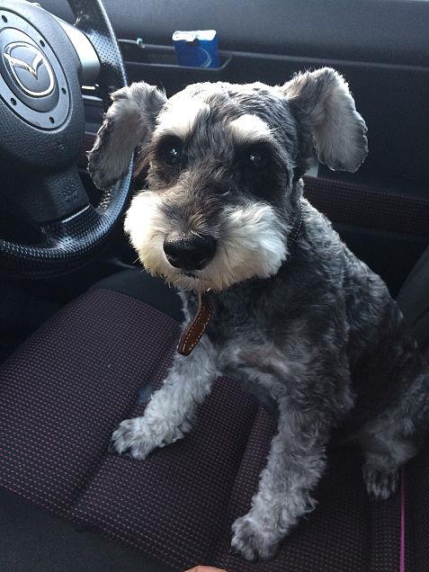 飼ってる犬ฅ՞•ﻌ•՞ฅワン♥だよの画像(プリ画像)