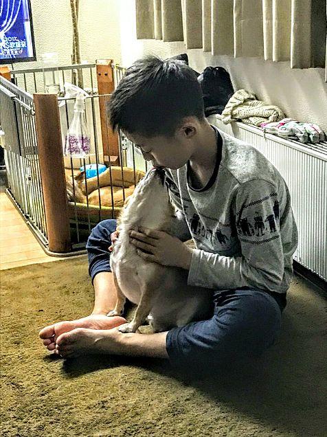 犬大好きの画像(プリ画像)