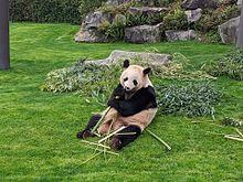 パンダ🐼の画像(可愛い パンダに関連した画像)