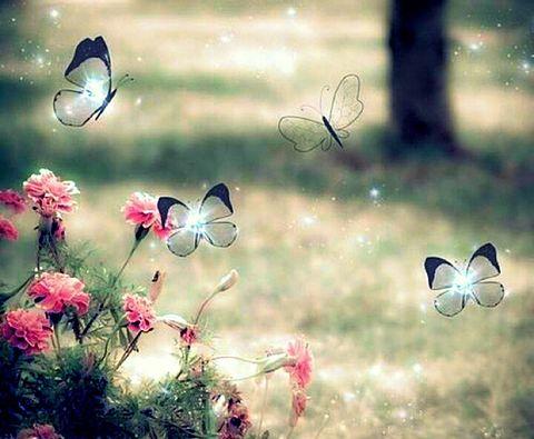 花 春 蝶々