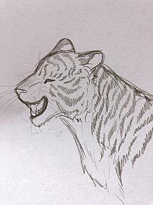 にっこり顔な虎さん🐅🐾の画像(笑顔に関連した画像)