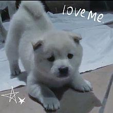 😍かわいい子犬 2😍の画像(プリ画像)