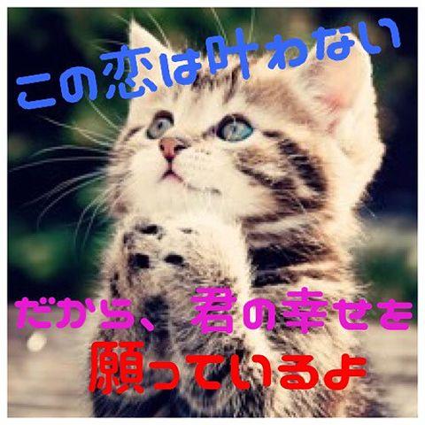 お願い猫の画像(プリ画像)