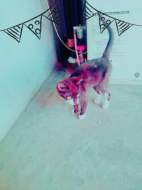 ばーちゃんちの猫♥の画像(プリ画像)