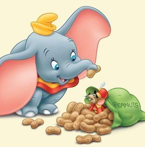 ピーナッツを食べているダンボです。