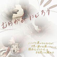 «村上 虹郎»の画像(CHEMISTRYに関連した画像)