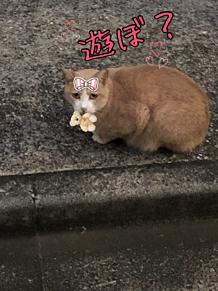 可愛い野良猫ちゃん。の画像(野良に関連した画像)