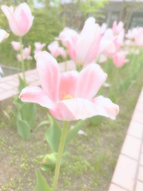 お花🌷の画像(プリ画像)