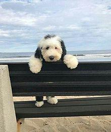 雰囲気 お洒落  子犬の画像(犬 おしゃれに関連した画像)
