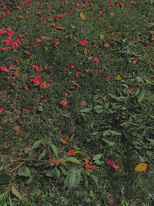 花の画像(映えに関連した画像)