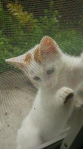 子猫ちゃん💗💗の画像(プリ画像)