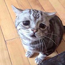 困り顔のかわいい子猫ちやんの画像(プリ画像)