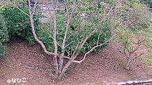 風景の画像(木々に関連した画像)