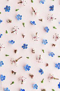 花の画像(iPhone壁紙に関連した画像)