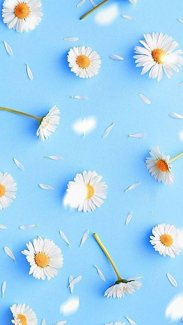 花の画像(プリ画像)