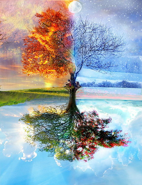 四季折々の木の画像(プリ画像)