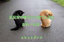 ボッスンと椿の画像(プリ画像)