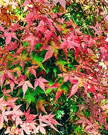 紅葉。の画像(自然に関連した画像)
