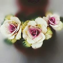 スプレーハボタン💮の画像(葉牡丹に関連した画像)