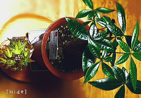 観葉植物🌴🍁の画像(プリ画像)